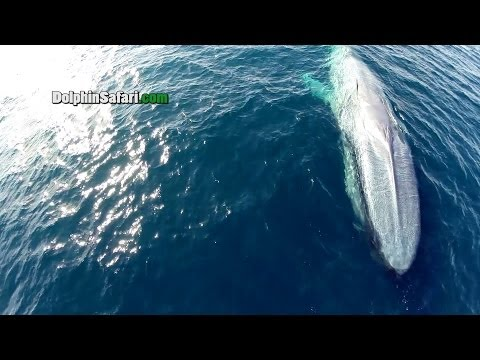 Drone Flying Over California Coast Spots Huge Whales, Massive Number of Dolphins
