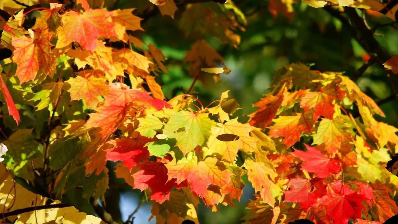 Les couleurs de l 39 t indien l 39 automne au qu bec youtube for Immagini autunno hd