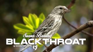 Video Serinus Atrogularis ( The Blackthroat Bird ) Singing - Burung Blackthroat Gacor download MP3, 3GP, MP4, WEBM, AVI, FLV Maret 2018