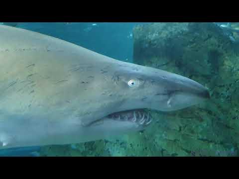 SEA LIFE Sydney Aquarium 2019