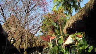隱峇里景觀餐廳民宿