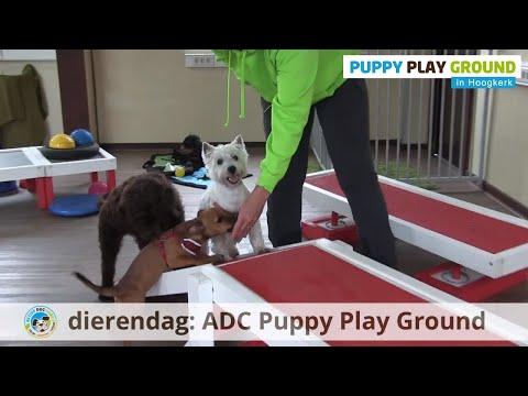 Active Dog Care Dierendag Special 2018, RTV Noord intro