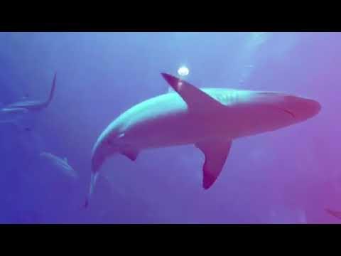 #TravelWithIMC Ke SEA Aquarium