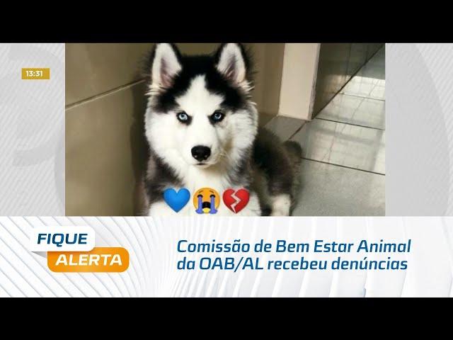 Comissão de Bem Estar Animal da OAB/AL recebeu denúncias de negligência e maus tratos de clínica