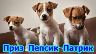 Клички для собак мальчиков — Легкие и красивые