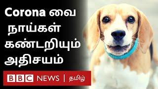 Sniffer Dogs: Coronaவால் பாதிக்கப்பட்டவர்களை நாய்கள் கண்டறிவது எப்படி? | Corona Update