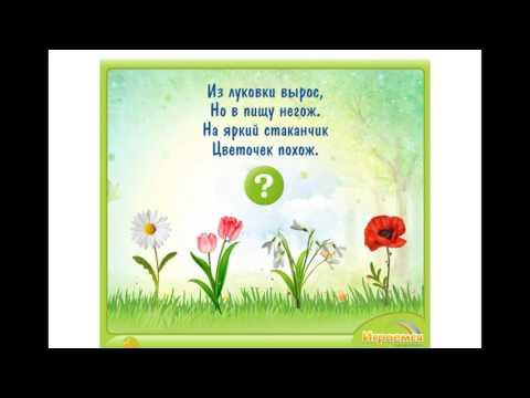 Отгадываем загадки про цветы, Solved riddles about flowers