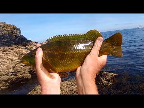 Shore Fishing - FANTASTIC Summer Fun Weedless LURE Fishing For WRASSE