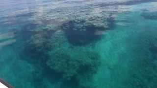 Big Coral Bommie!!  Harbour Lagoon,  Great Barrier Reef!! Thumbnail