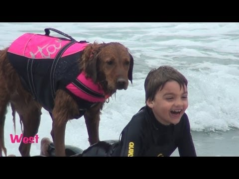Surf dog Ricochet helps kids with special needs surf - Happiness alert!