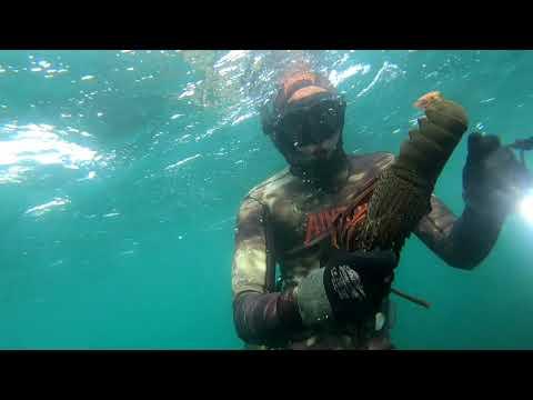 Spearfishing Sydney Northern Beaches