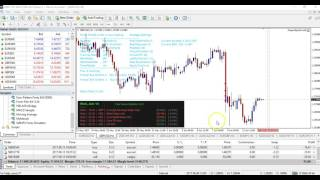 Forex Flex - Update Video 3