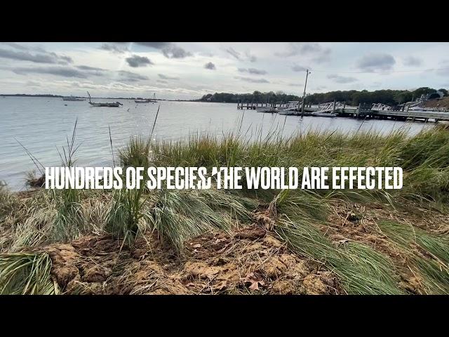 Sydney Burke World of 7 Billion PSA