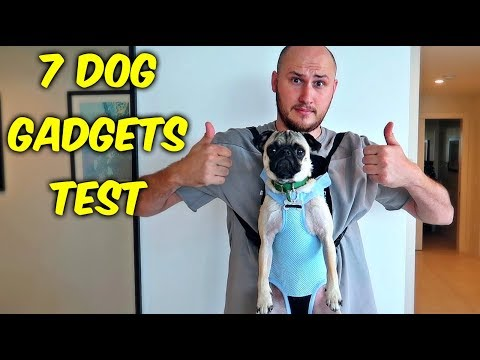 Thumbnail: 7 Dog Gadgets Put to the Test part 5