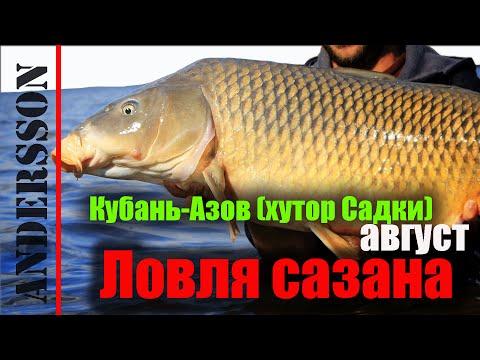 трофейная рыбалка карп амур в краснодарском крае и адыгее