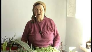 Как выращивать арахис на огороде? Рассада арахиса(Моя мама любила арахис. Чтобы его не покупать, да и мало его тогда было, она выращивала из семян. Примерно..., 2015-11-30T05:28:44.000Z)