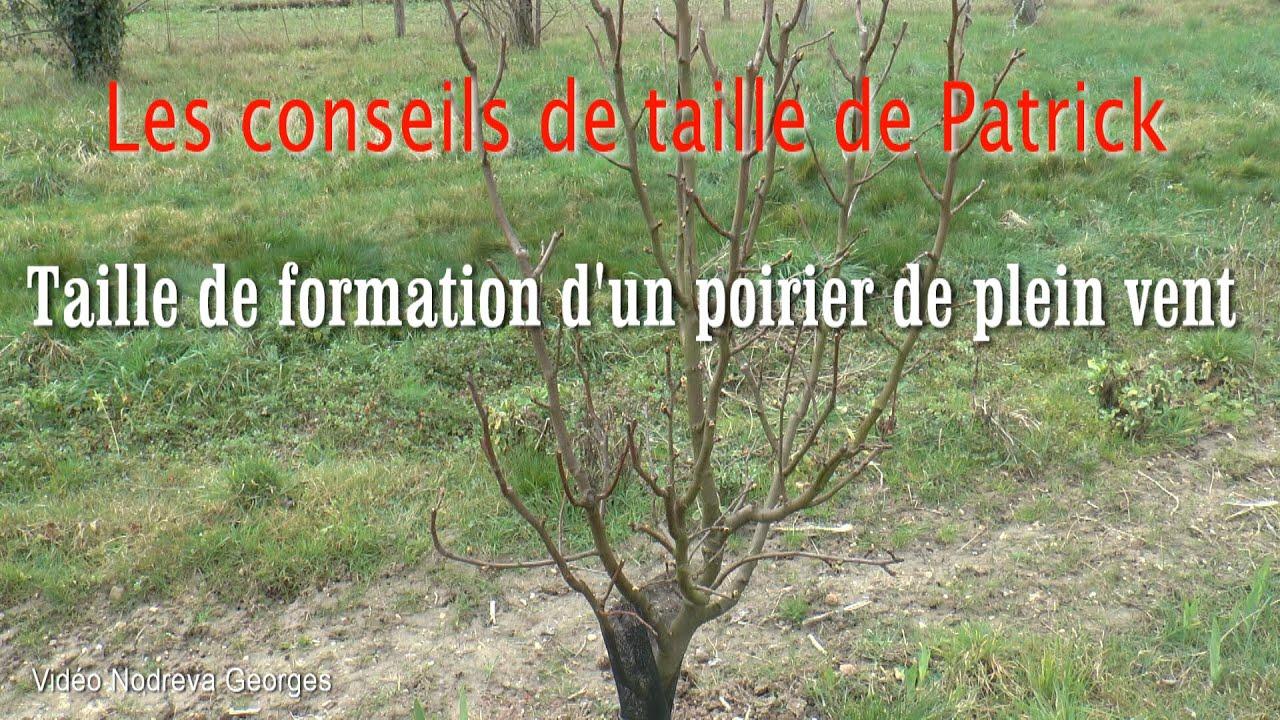Taille de formation d 39 un poirier youtube - Taille des hortensias en mars ...