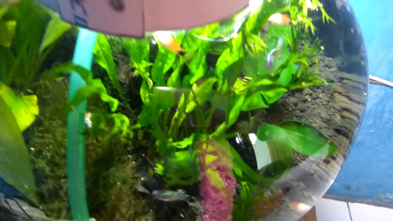 810 Ide Desain Dudukan Lampu Aquarium HD Paling Keren Yang Bisa Anda Tiru
