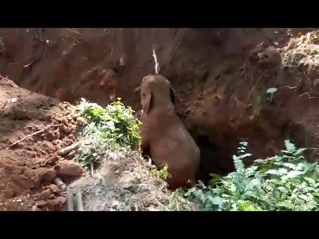 Wild Elephants salutes the men who rescued their baby elephant from a ditch