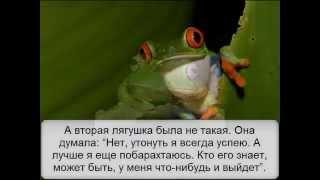 Притча  Две лягушки