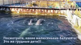 #китоваятюрьма Белушата совсем груднички!
