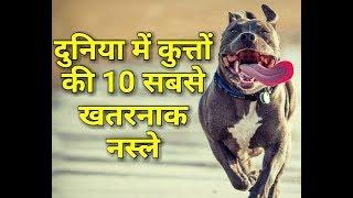 दुनिया में कुत्तों की 10 सबसे खतरनाक नस्ले (World'S 10 Most Dangerous Dog Breed)  In Hindi 2017