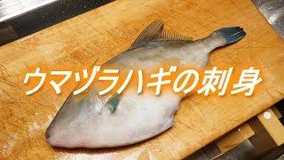 ウマヅラハギのさばき方と刺身(薄造りと肝ポン酢)