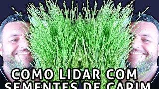 COMO LIDAR COM SEMENTES DE CAPIM - MAGO DOS COLEIROS