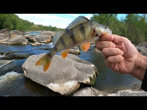 Риболовля на перекатах річки Південний Буг