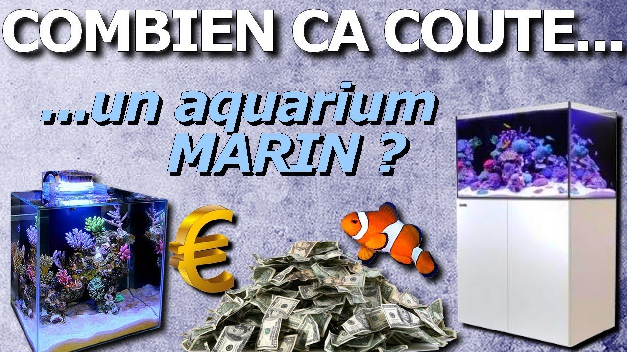 Combien ca coute un aquarium marin youtube for Piscine combien ca coute
