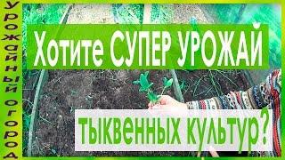 СУПЕР УРОЖАЙНЫЙ СПОСОБ ВЫРАЩИВАНИЯ КАБАЧКОВ,ТЫКВ И ПАТИССОНОВ!!!