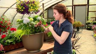 Hydrangea Combinations for Your Container Gardens with Katie Ketelsen