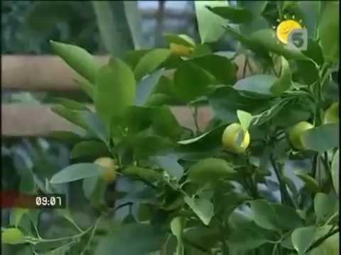 Продукты, понижающие давление – шиповник, лимон, рябина