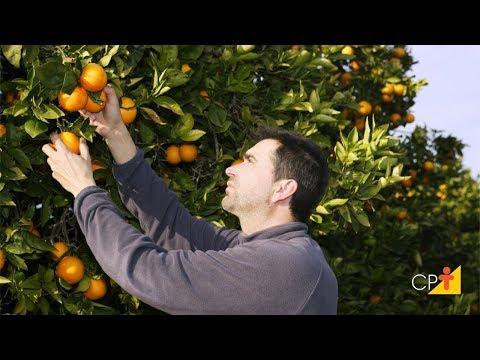 Curso a Distância Produção Comercial de Frutas em Pequenas Áreas CPT