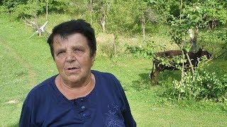 Katina Medulja jedina krava u pet sela