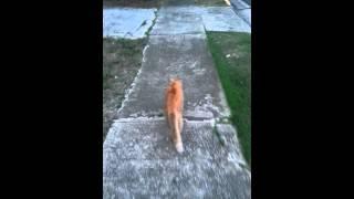 Sampson the cat