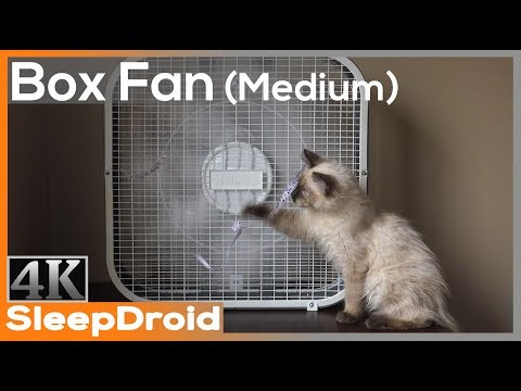 ►10 Hours Of Box Fan White Noise Sounds For Sleeping (Medium Speed) With Cute Kitten, 4K Window Fan