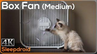 Gambar cover ►10 hours of Box Fan White Noise Sounds for Sleeping (Medium Speed) with Cute Kitten, 4K Window Fan