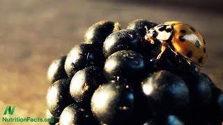 Bobuloviny vs. pesticidy při Parkinsonově nemoci