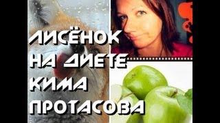 Как Лисёнок сидел на диете Кима Протасова. Часть 1. (1 и 2 неделя)