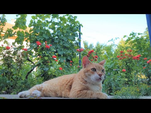 Cats In Paradise