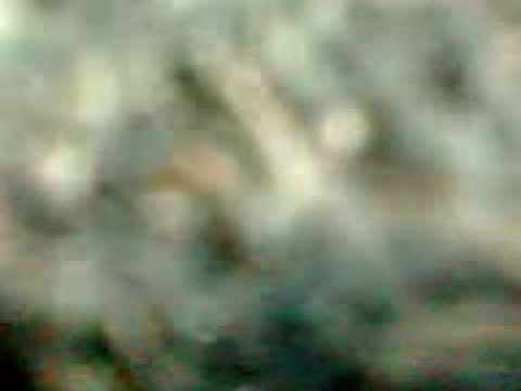 video kite nian