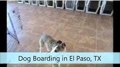 Dog Boarding El Paso TX Julian's Doggie Daycare & Boarding