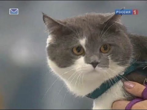Как отучить кота что бы он не бросался на ноги