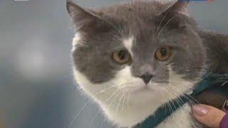 Кошка царапается и кусается что делать? Кошачьи болезни