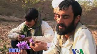 Afg'oniston qishloq xo'jaligi - Afghanistan agriculture