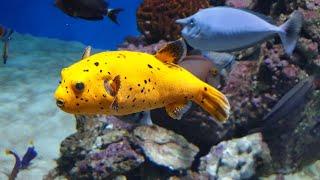 Чесать и кормить рыбонек, носить на руках русалку - работа мечты!