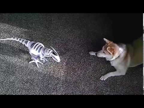 Bolt the Dog vs Evil Robot Dinosaur