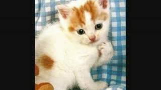 """Lloyd Webber """"Memory"""" de Cats - Flute a bec - recorder - Jean Cassignol"""