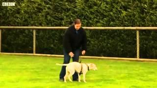 Bbc News - Crossbow Bolt Shot Dog Ziggy 'making Miraculous Recovery'